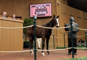 Hip 517, 2013 Keeneland January Horses of All Ages Sale