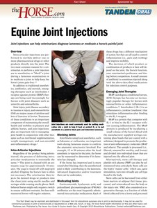 joint injection thehorse dot com
