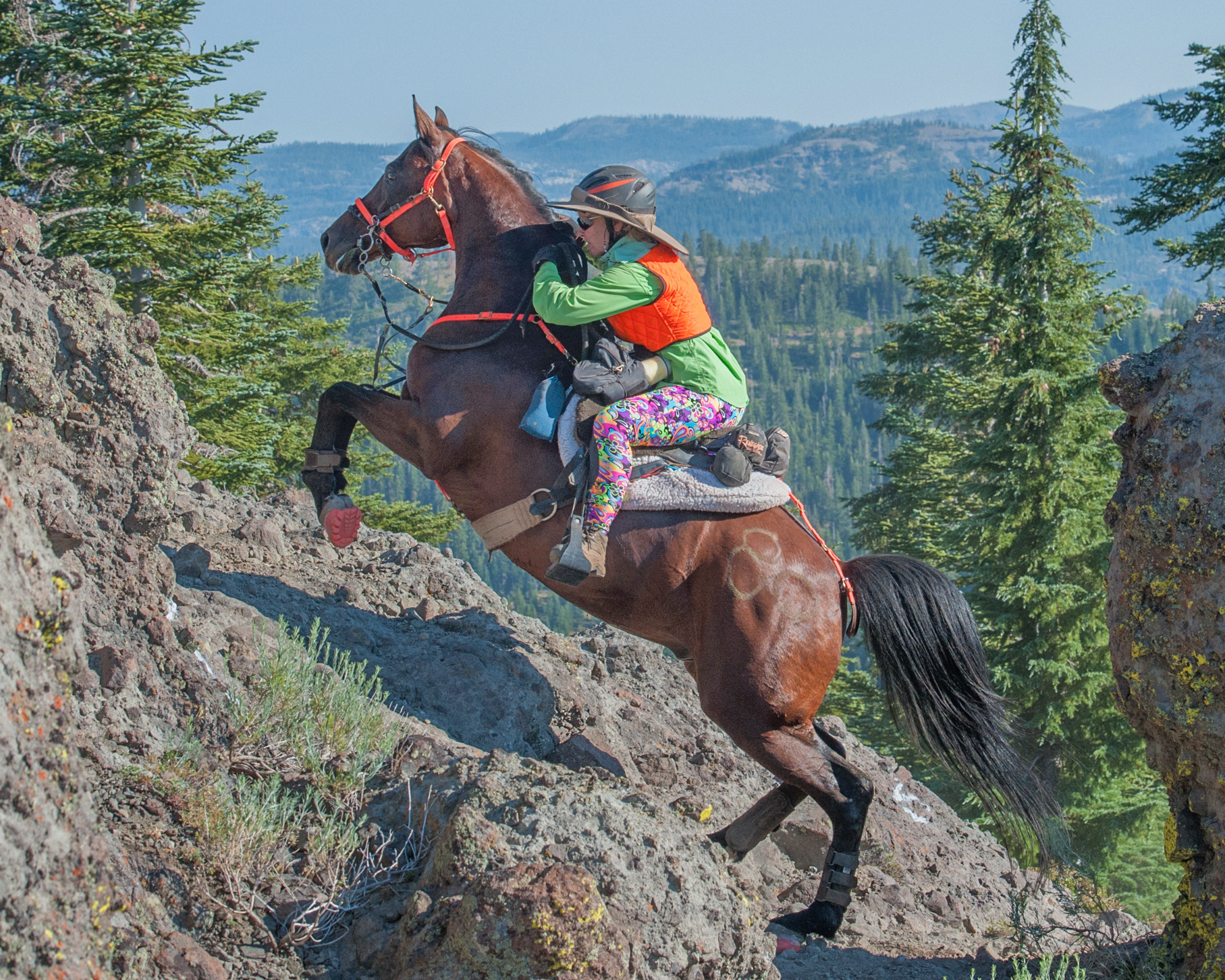 Everything Tevis, Cooling Out In Hot Weather, Endurance for  Aug. 13, 2019