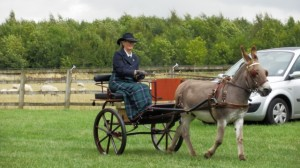fergus-champ-driving-donkey source h and c tv