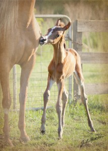 Charms filly 2012