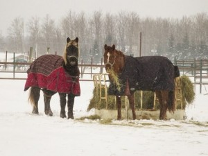 horse hay winter snow