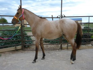 Rainbow Meadows Equine Rescue and Retirement Analina