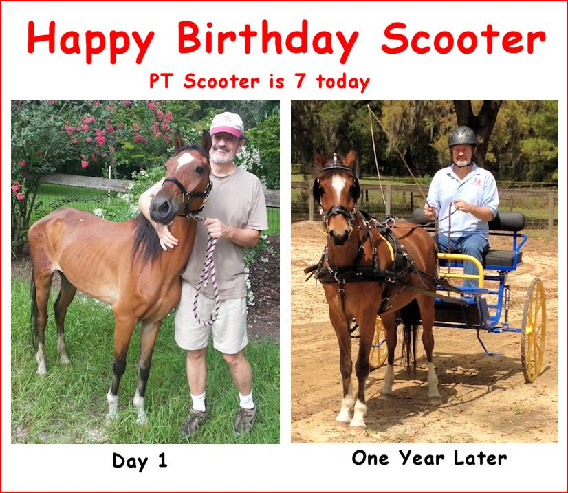 PT Scooter's Story or How Really Bad Ads Saved One Hackney Pony's Life – HITM for 02-14-2018 by Horseloverz.com
