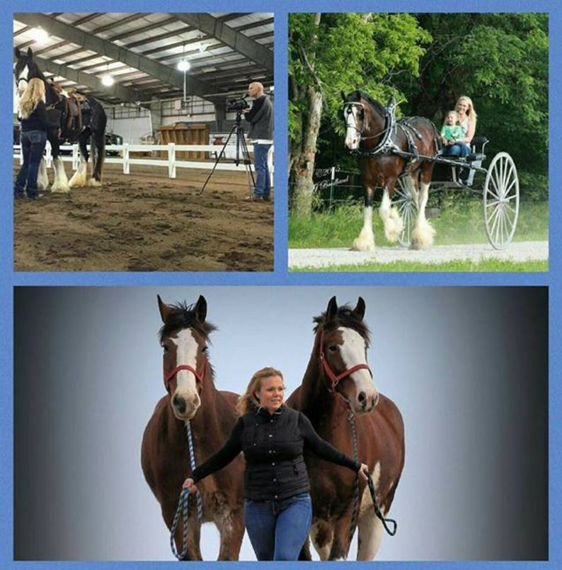 06-01-17 by 2018 World Clydesdale Show – Bee Tree Trail Carriage Tours, Performance Unlimited Clydesdales, Haugen-Hill Shires
