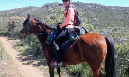 06-13-2017 Endurance Day – Cardiac Recovery Index, AERC Microchip Program, Phyllis' Pacific Coast Trail Update