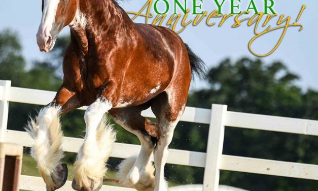 08-03-17 by 2018 World Clydesdale Show – Heavy Horse History, Indiana State Fair, Exporting Heavy Horse Genetics