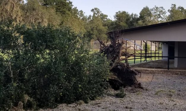 HRN IRMA Report, Monty Roberts and Allergies by Omega Alpha Equine for Sept 18, 2017