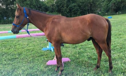 AEC's Final Wrap, Helping Horses in Nicaragua, Rescue Horse Named Riot – by Omega Alpha Equine for 09-04-17