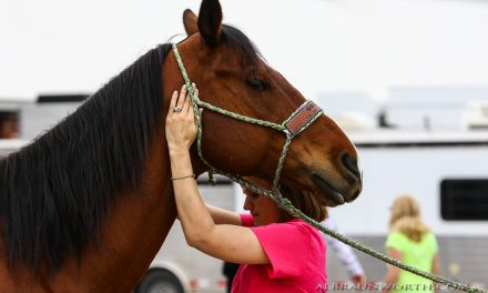 Draft Horse Journal Presents Equine Therapist Anne Hildreth Nisley and Justin Hussey of White Mountain Percherons by The 2018 World Clydesdale Show for 10-05-17