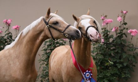 German Riding Pony, Foxhunting in Ireland, Horse Shopping in Vegas – by Omega Alpha Equine for 10-16-17