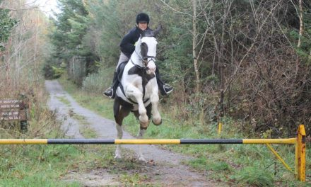 Falconry and Foxhunting in Ireland, Budget Equestrian DIY'er Paradise – by Omega Alpha Equine for 10-30-17