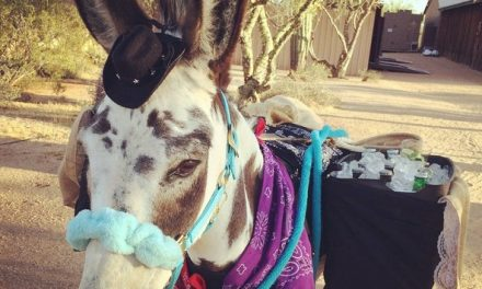Beer Burro, Breeders' Cup Picks, 1st World Problems, Walk In Horse – by Kentucky Performance Products for 11-03-17