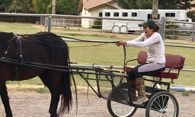 Bucked Off, Shetland Morgan Stallion, Charlie Daniels Christmas – by Kentucky Performance Products for 12-01-17