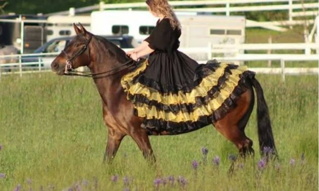 Horse Ruffles, Equestrian 1st World Problems, Horse Nation – 01-15-18 by Omega Alpha Equine