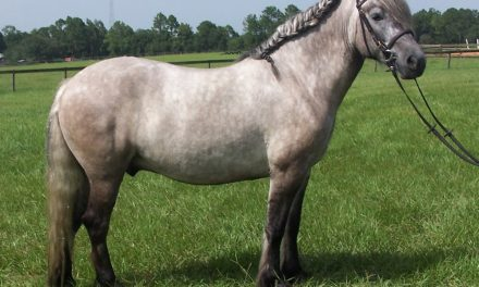 Highland Pony, Arabian Racing Radio, Party Percheron – by Kentucky Performance Products for 01-19-18