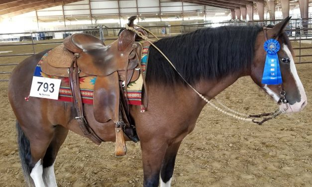 Value of Patience, New Age of Horsemanship, Groundwork for Anxious Horse, July 11, 2019 by Horseware