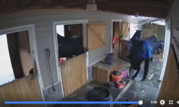 Horses Caught on Camera, Ride and Tie, Winter Riding – 09-11-18 Endurance Re-visit