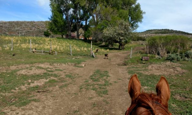 Idaho, Nevada New Pioneer Rides, Importance of Ride Strategy, Endurance Day for Feb. 12, 2019