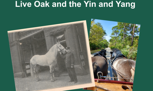 Driving Episode: Goliath the Fire Horse, On the Carriage, Live Oak and the Yin and Yang Feb. 6, 2020